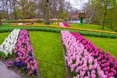 Premier rose frais de ressort, pourpre, ampoules blanches de jacinthe Parterre avec des jacinthes en parc de Keukenhof, Lisse, Ho Photographie stock libre de droits