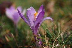 Premiers fruits des fleurs La source vient ici les premières usines de la fleur de mars, la bonne saison arrive images stock