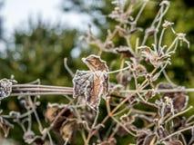 Premiers gel et neige sur les feuilles - 9 Photos libres de droits