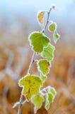 Premiers gels. Image libre de droits