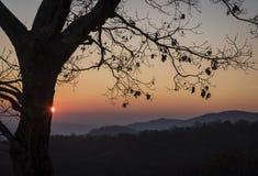Premiers rayons d'aube contre un arbre de sommet de montagne Photo stock
