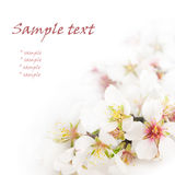 première source de fleurs Image libre de droits