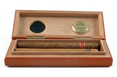 Premium cigars in cigar box Royalty Free Stock Image