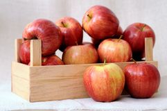 Premium gala apples Stock Images