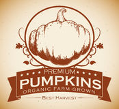 Premium Pumpkins Label, Vector Illustration Stock Photography
