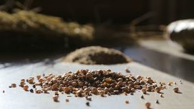 Premium quality certified organic and natural feed for cattle, animal feed stock video