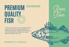 Premium Quality Zander. Abstract Vector Fish Packaging Design or Label. Modern Typography and Hand Drawn Pikeperch. Silhouette Background Layout Stock Photography