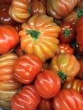 Premium tomatoes Stock Images