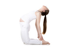 Prenatal Yoga, Ustrasana Stock Photos