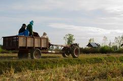 Prenda gli agricoltori del riso dopo il raccolto completato per tenere la l Fotografie Stock