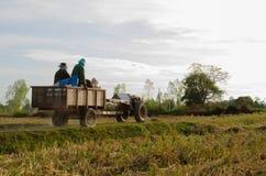 Prenda gli agricoltori del riso dopo il raccolto completato per tenere la l Immagini Stock