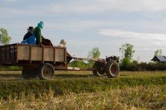 Prenda gli agricoltori del riso dopo il raccolto completato per tenere la l Fotografie Stock Libere da Diritti