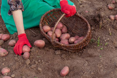 Prenda il raccolto Fotografia Stock Libera da Diritti