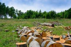 Prenda la cura degli alberi e della foresta Fotografie Stock