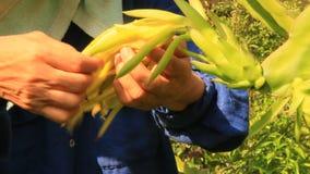 Prenda la cura delle piante e dei fiori nel giardino stock footage