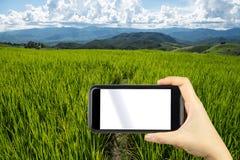 prenda la foto dallo smartphone Giacimento a terrazze sulla montagna, PA Po del riso Fotografie Stock Libere da Diritti