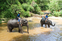 Prenda un elefante del bagno fotografie stock libere da diritti