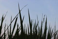 Prenda un oggetto alto dell'erba nel giardino fotografia stock