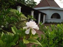 Prenda un piccolo oggetto della foto del fiore bianco fotografia stock