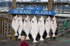 Prendedor de peixes frescos foto de stock