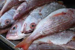 Prendedor de peixes frescos Fotografia de Stock Royalty Free