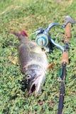 Prendedor de pesca Fotos de Stock