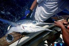 Prendedor e liberação do espadim branco do peixe agulha no barco imagem de stock royalty free