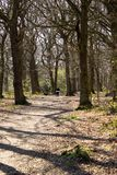 Prendendo il cane per una passeggiata attraverso il legno fotografia stock