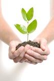 Prendendo um sprout pequeno Fotografia de Stock Royalty Free
