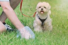 Prendere la poppa del cane fotografia stock libera da diritti