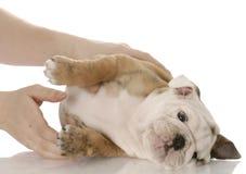 Prendere un piccolo cucciolo immagine stock libera da diritti