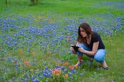 Prendre des photos des Bluebonnets Images libres de droits