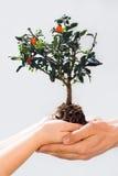 Prendre soin de nouvel arbre ou de l'environnement Photo libre de droits