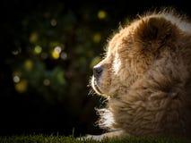 Prendre un bain de soleil le chien de bouffe Photo stock