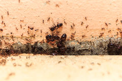Prenez garde de la grande fourmi de foule, ils a vécu dans la maison photos stock