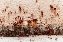 Prenez garde de la grande fourmi de foule, ils a vécu dans la maison Photographie stock libre de droits