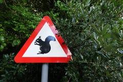 Prenez garde des écureuils Image stock
