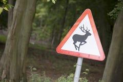 Prenez garde des cerfs communs Images libres de droits