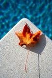 Prenez le plongeon Photo stock