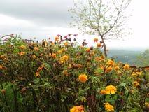 Prenez les photos de la fleur défraîchie photos stock