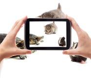 Prenez une photo des animaux familiers Images libres de droits