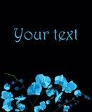 Prentbriefkaar met blauwe orchideeën Stock Foto's