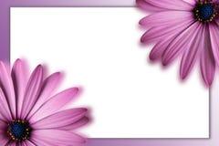 Prentbriefkaar met bloemen Royalty-vrije Stock Foto's