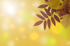 Prentbriefkaar met de herfstbladeren Stock Afbeeldingen