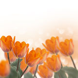 Prentbriefkaar met elegante bloemen en lege plaats voor uw tekst Royalty-vrije Stock Foto