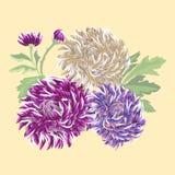 Prentbriefkaar met gevoelige chrysant drie Stock Afbeelding