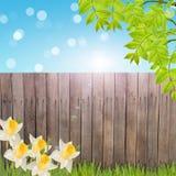 Prentbriefkaar met vers de lentegebladerte en lege plaats voor uw tex Stock Afbeeldingen