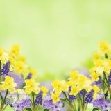 Prentbriefkaar met verse bloemen en lege plaats voor uw tekst Stock Afbeelding