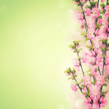 Prentbriefkaar met verse bloemen en lege plaats voor uw tekst Royalty-vrije Stock Afbeelding