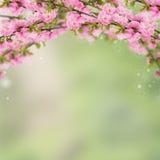 Prentbriefkaar met verse de lente bloeiende struik en lege plaats voor y Royalty-vrije Stock Foto's